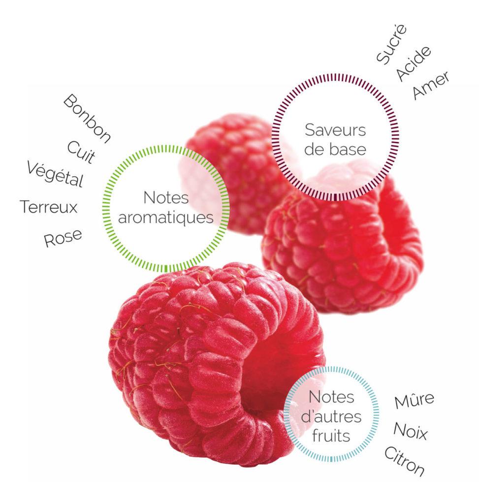 Profil Framboise Fruitologie - les Vergers Boiron