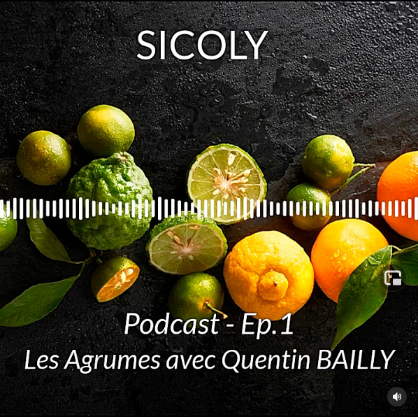Podcast Sicoly