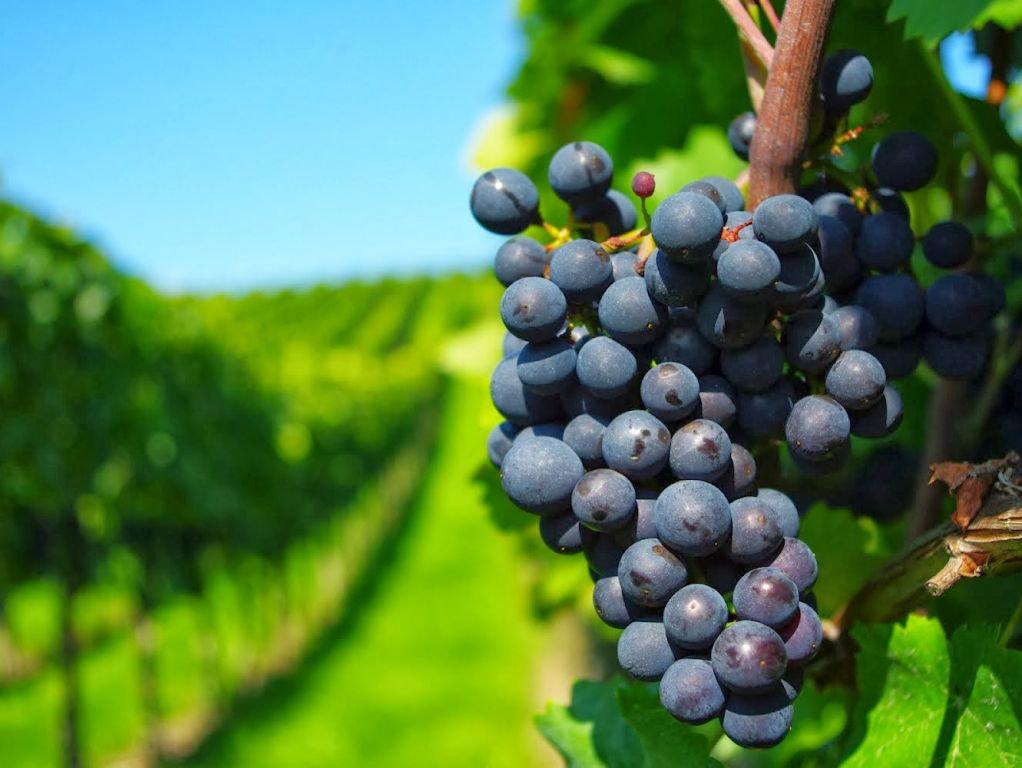 L'Uruguay est aussi un pays de beaux vignobles ©VinalesPortalesdeUruguay